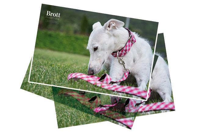 Collares para perros con mucho estilo de Brott Modern Dog
