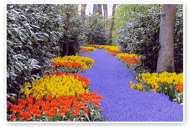 Parque ideal que hay en Holanda que se llama Keukenhof y que en primavera se convierte en el mayor expositor de flores del mundo