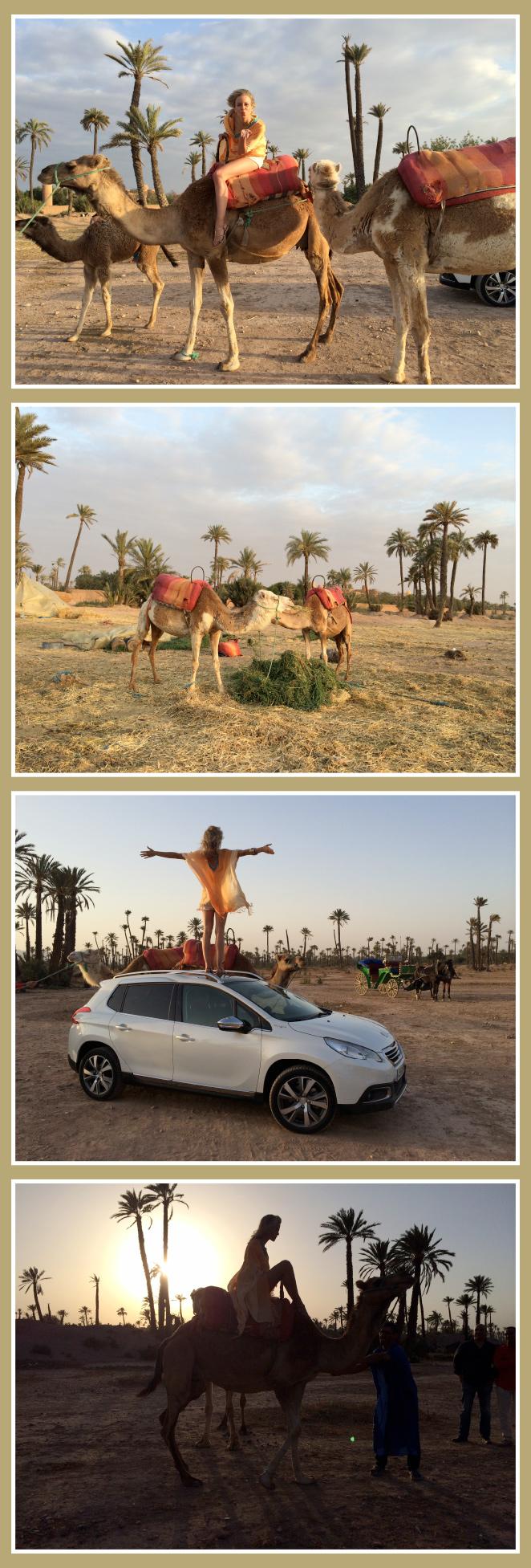 El espectacular Palmeral, situado en los exteriores de Marrakech