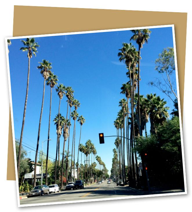 La primera imagen que se me viene a la cabeza cuando pienso en Los Ángeles es ésta. Sus avenidas repletas de palmeras!!