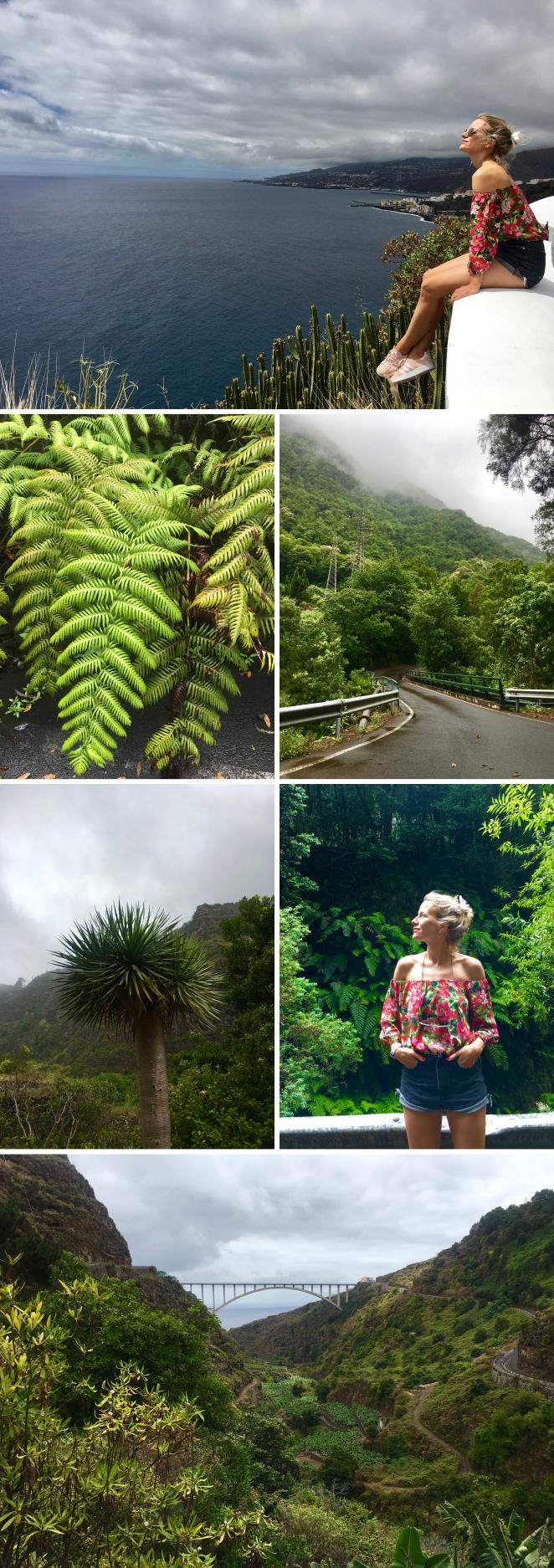 El Bosque de los Tilos fue nuestra siguiente parada, previo paso por el Mirador Barranco de los Gomeros, donde se consiguen unas fotos sencillamente espectaculares. El Bosque de los Tilos es uno de los bosques de laurisilva más importantes de Canarias, pero, además, destaca porque cuenta con plantas prehistóricas, heredadas de la época terciaria. De hecho, fue declarado en 2002 Reserva Mundial de la Biosfera por la Unesco, una protección que hoy engloba a toda la isla de La Palma. Tilos, helechos gigantes, viñátigos, palos blancos, laureles, acebiños, barbuzanos, madroños, peralillos, fayas y brezos son algunas de las especies que alberga, sobre las que vuelan las palomas turqué y rabiche.