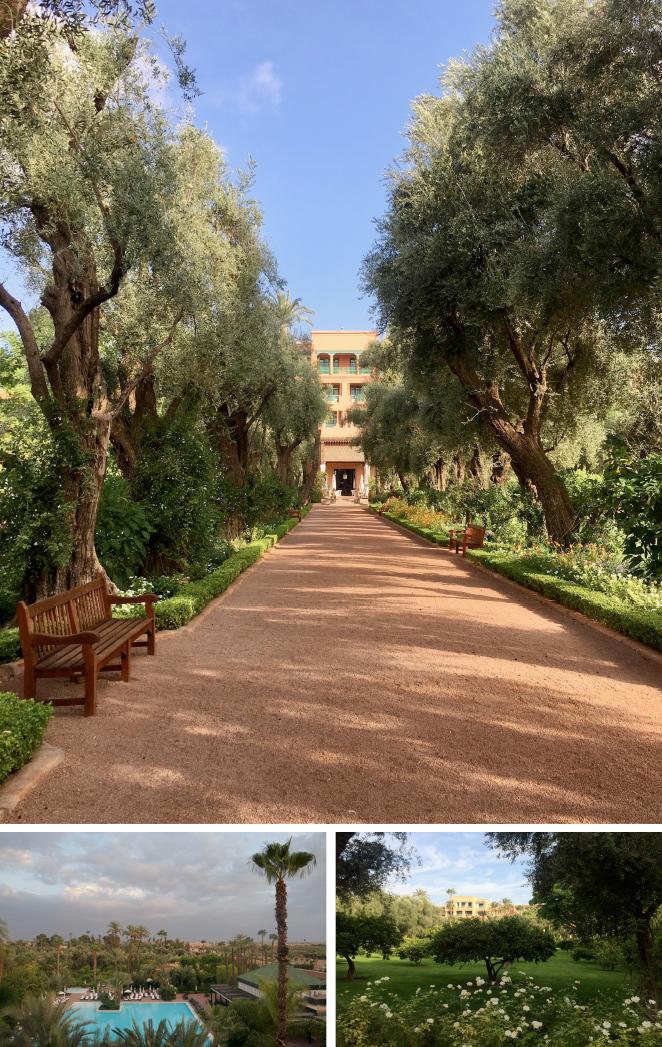 El hotel fue un regalo del rey Moulay Abdellah a su hijo Moulay Mamoun en el siglo XVIII (de ahí su nombre). Entonces eran solo unos jardines que hoy se han convertido en un auténtico vergel con árboles frutales, olivos centenarios, flores ricas en fragancias… ocho hectáreas que hacen de La Mamounia un verdadero paraíso.