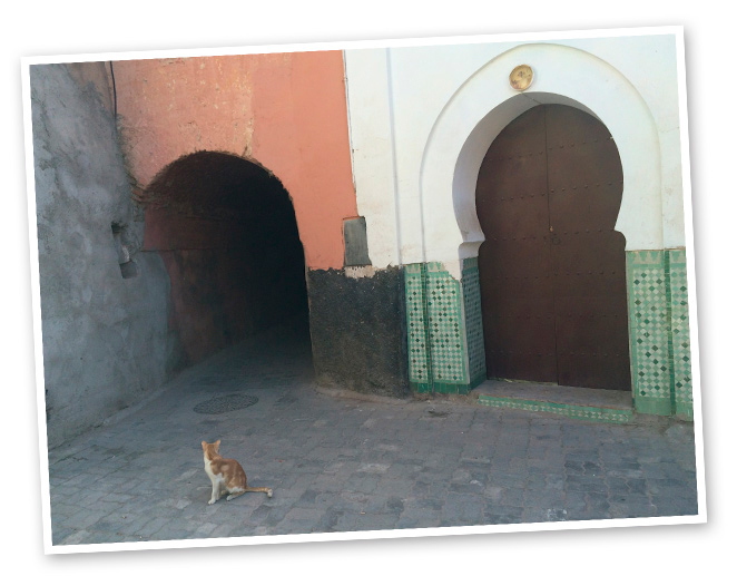 Dos curiosidades: en Marrakech os encontraréis infinidad de gatos (porque los habitantes de La Medina creen que los perros asustan a los ángeles cuando ladran) y no dejaréis de ver por todas partes la famosa mano de Fátima, que según la cultura musulmana cura dolencias y previene del mal de ojo.